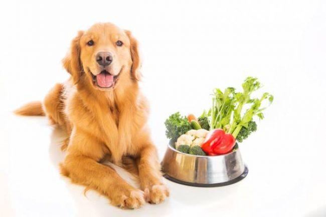 Корм для собак Pro Plan