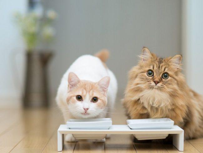 Grandorf корм для кошек