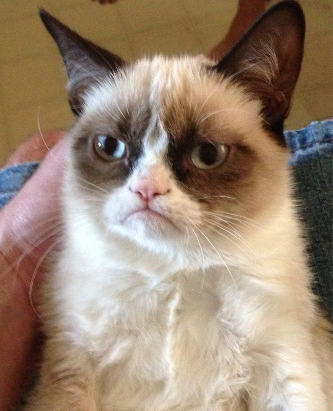 фото печальный кот