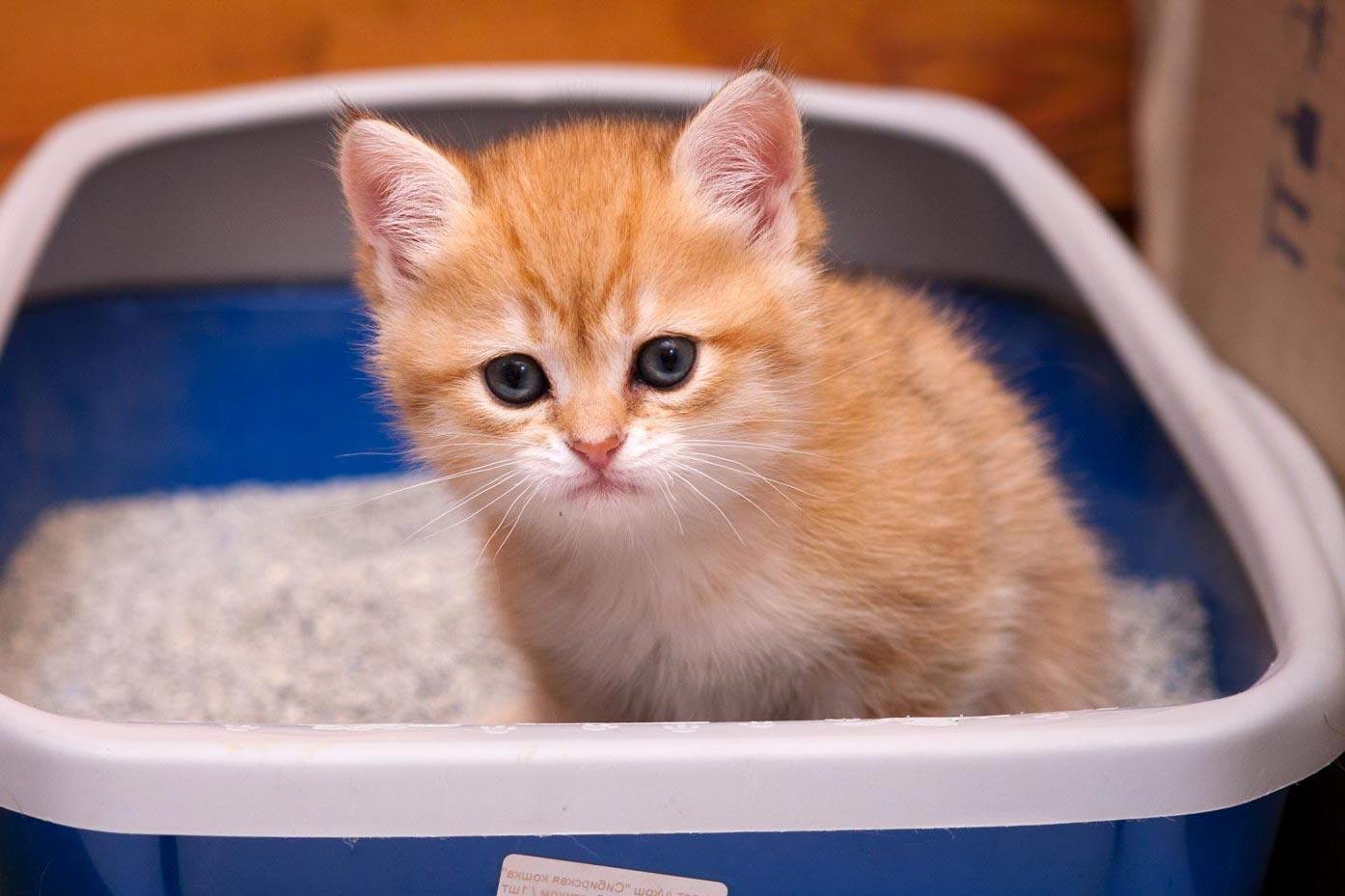 Почему кошка ходит по большому не в лоток