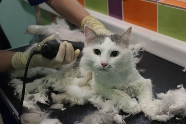 Машинка для стрижки кошек в домашних условиях