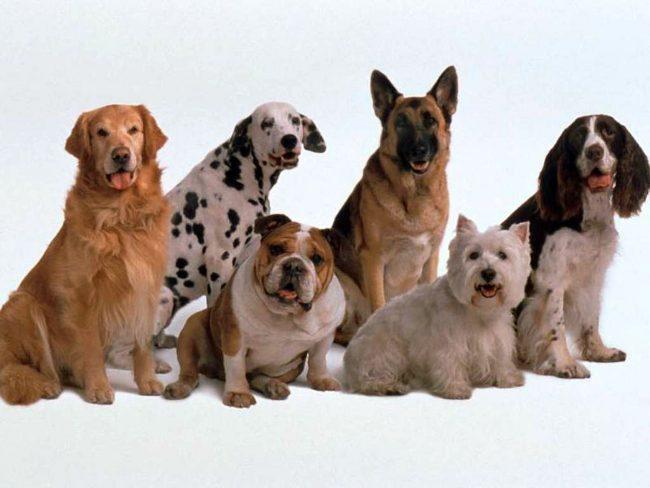 Grandorf корм для собак