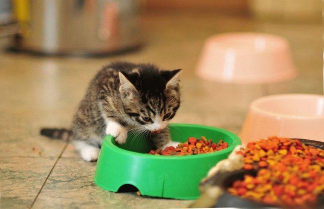 Корм для кошек Pro Plan