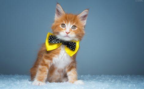 Клички для кошек мальчиков красивые