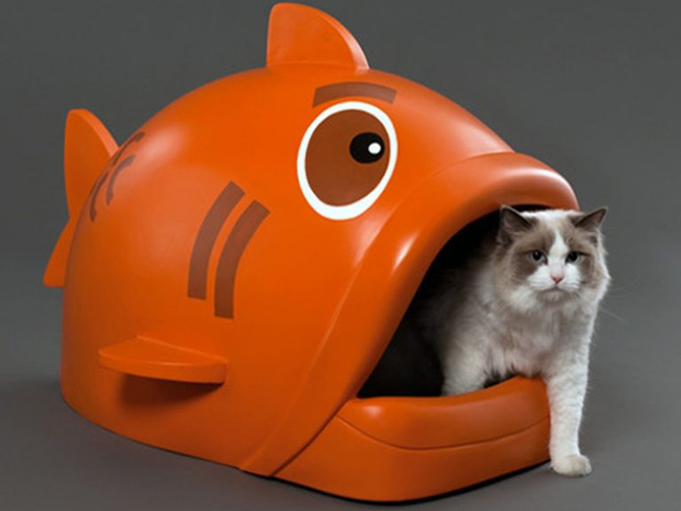 1 litter box for 2 cats