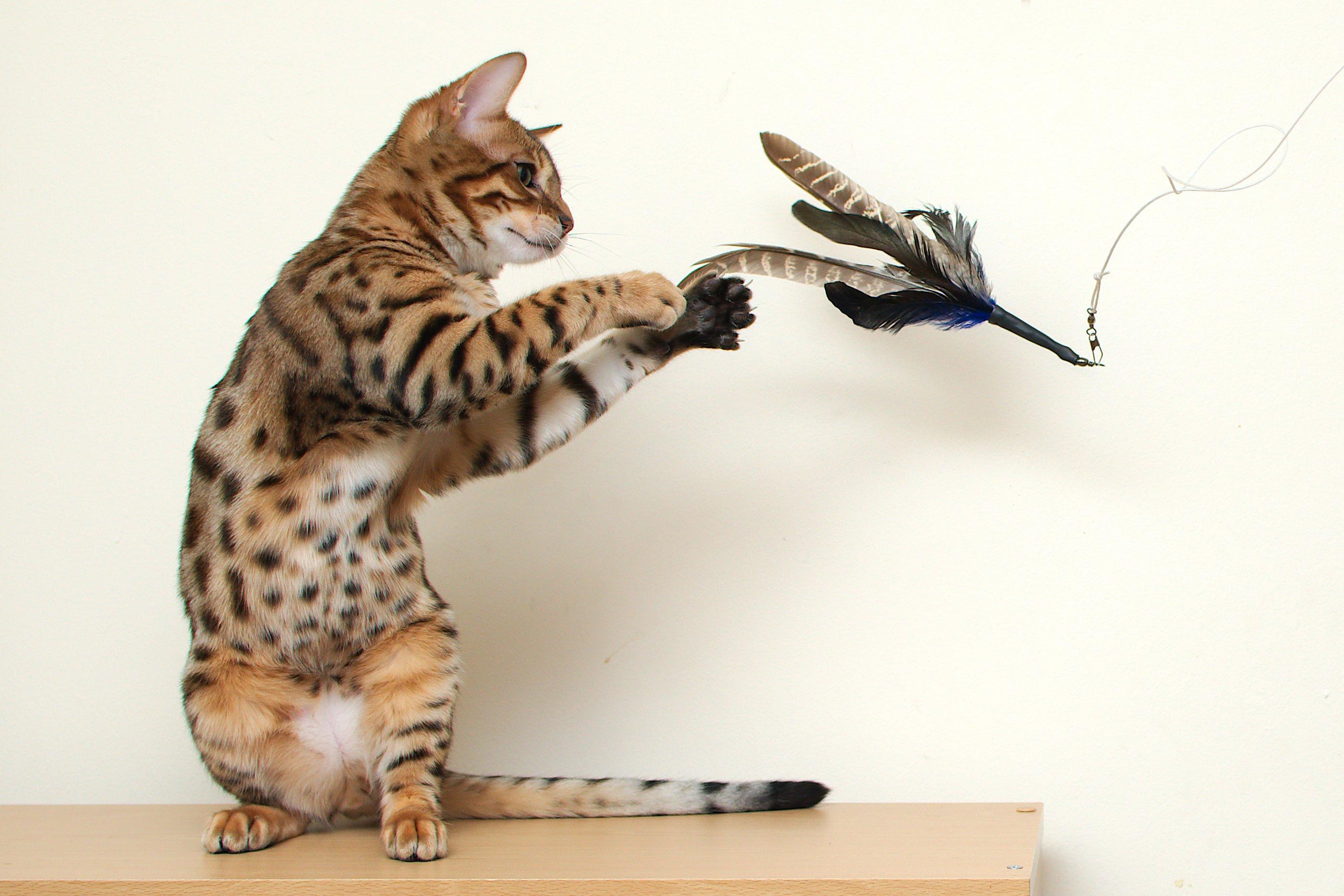 Какие игрушки можно сделать для котенка фото 759