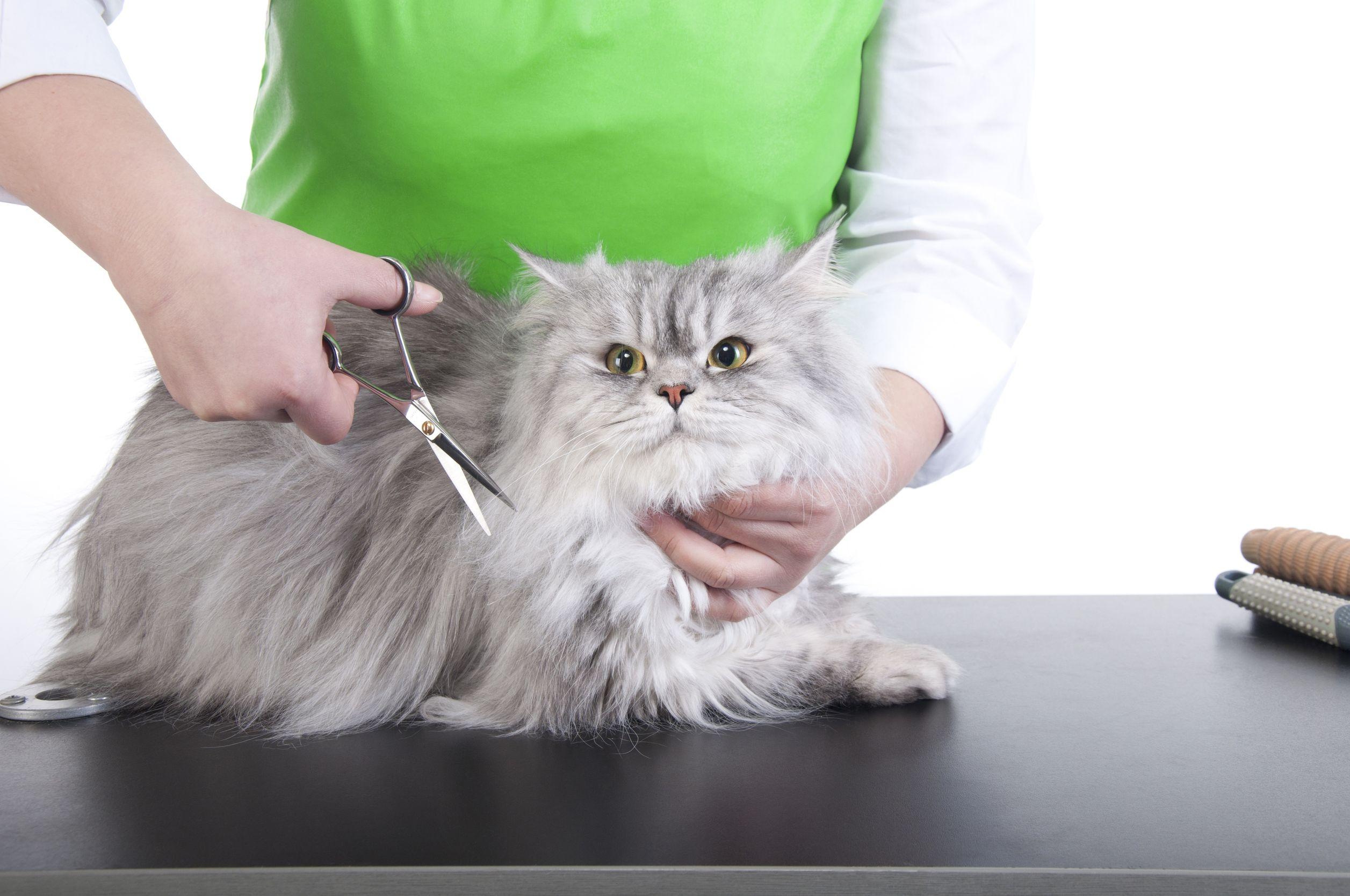 Как сделать кошачью голову фото 416