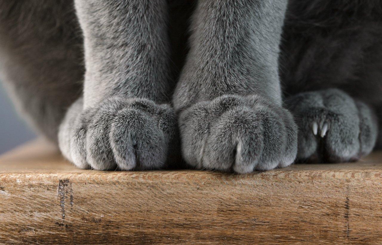 Почему кот топчется передними лапами