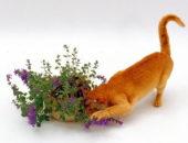 Кошачья мята для чего она нужна