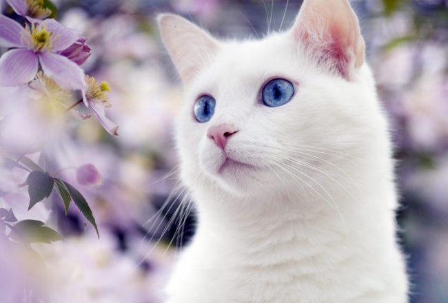 17 лет коту сколько человеческих