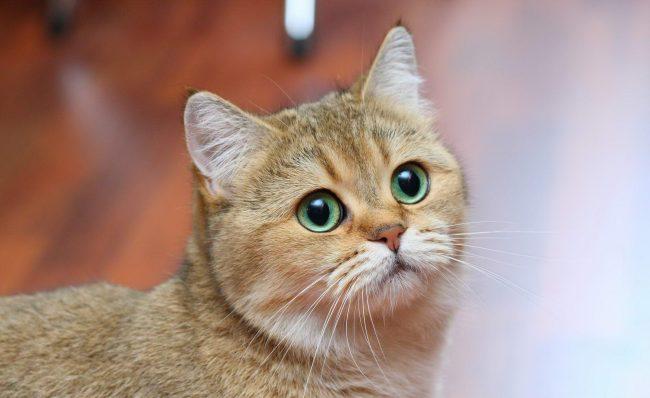 Сколько лет коту в 16