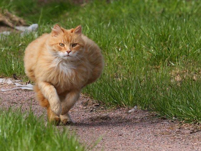 Корм для кошек Eukanuba
