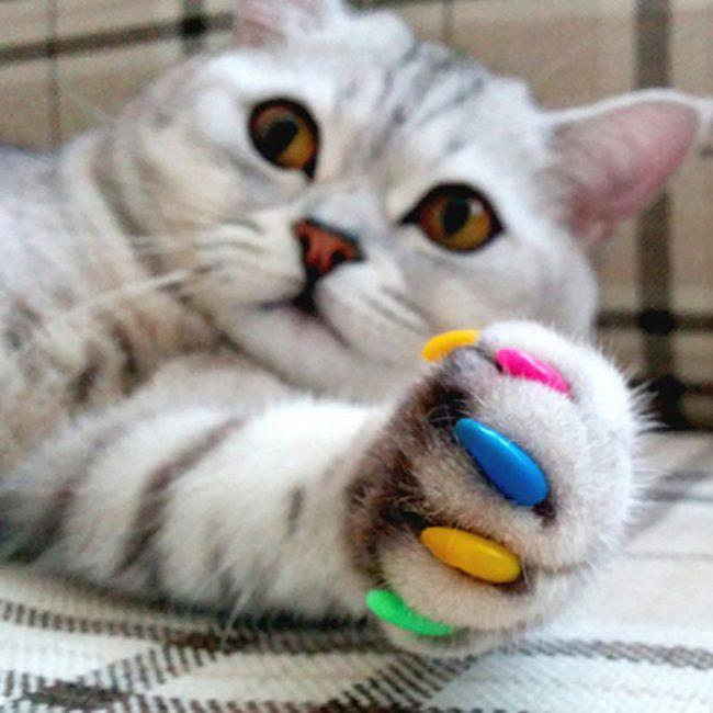 Антицарапки для кошек