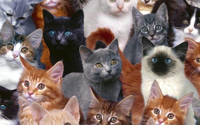 Популярные клички черным котам