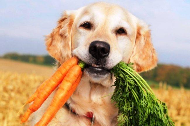 Акана корм для собак отзывы