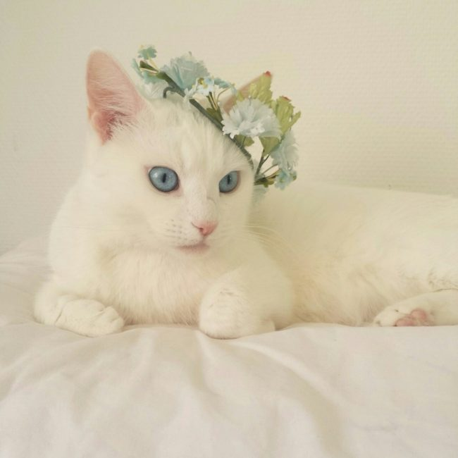 Ночной охотник корм для кошек