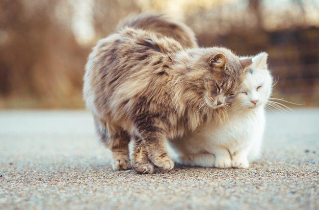 Как определить возраст котёнка