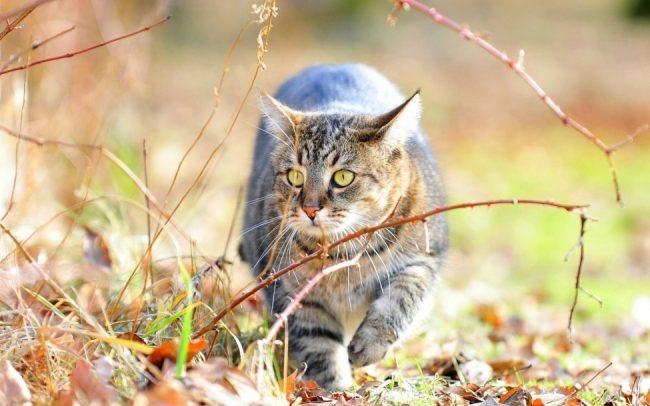 Почему кошки топчут нас лапками