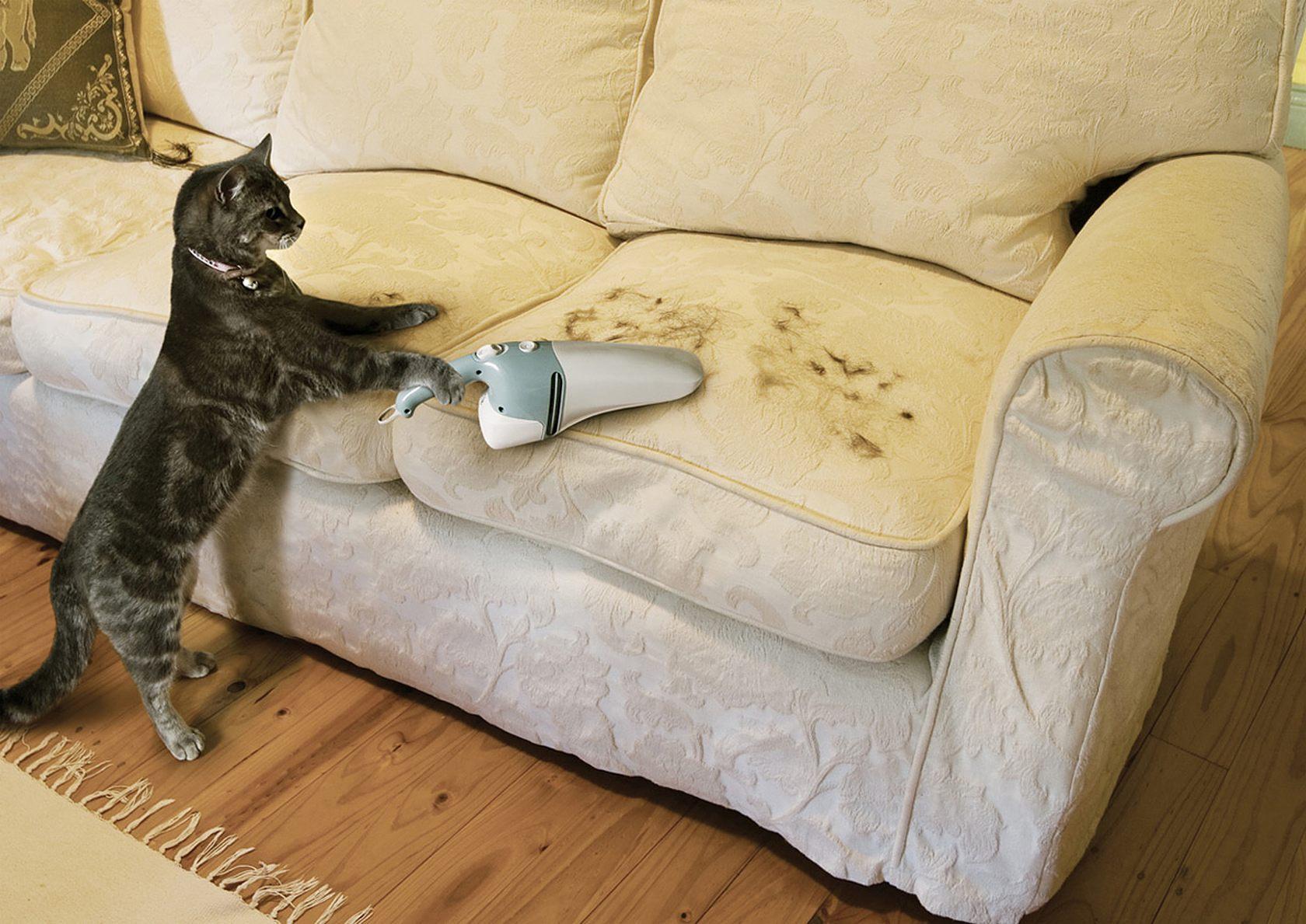 узнав фото приколы кошки вальяжные встречаются вытянутые