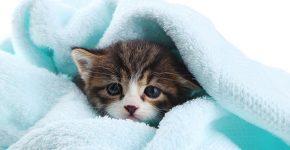 Шампунь для котят от блох