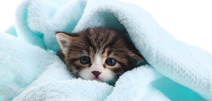 Помыли кошку шампунем от блох