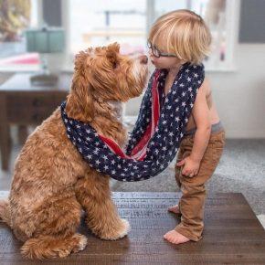 Лабрадудль с маленьким мальчиком