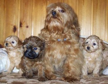 Мама со щенятами