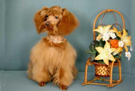 Петербургская орхидея сидит рядом с цветком