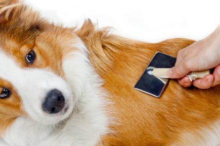 Человек расчёсывает собаку