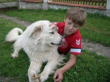 Словацкий чувач с мальчиком