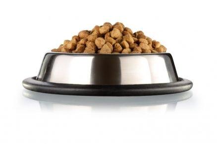 Сухой корм для собак в миске