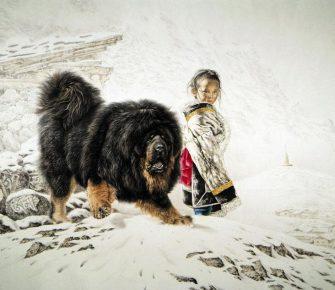 Тибетский мастиф охраняет ребёнка в снежных горах