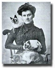 Дама с кошками сиамской породы