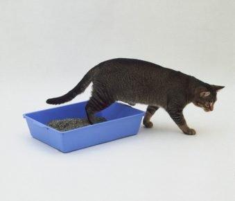 Кот гадит в неположенном месте