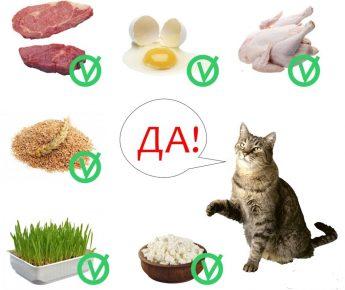Натуральный рацион для кота