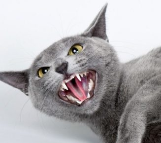 Как отучить кота кидаться и царапаться