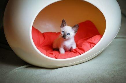 Спальное место для котиков