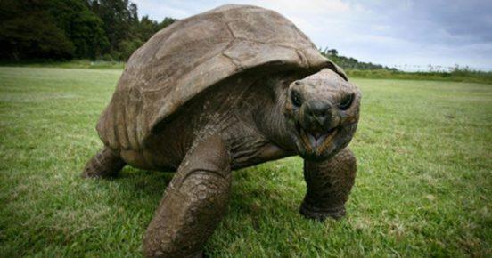 Джонатан черепаха