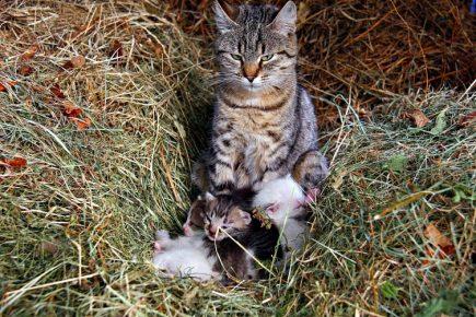 Кошка и потомство
