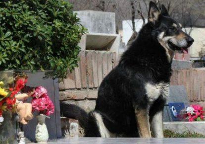 самые верные собаки топ