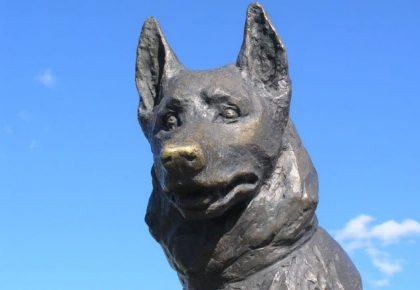 самые верные собаки мира