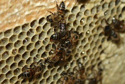 Пчёлы в улие