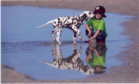 Далматинец играет с ребенком