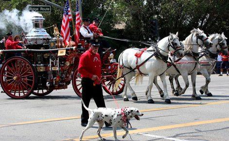 Далматинец, задействованный в шествии с раритетной пожарной машиной