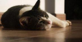 Глисты у кошки