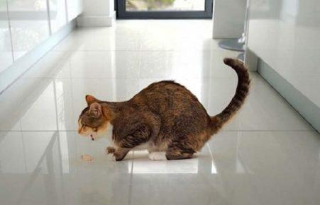 Кошачья рвота
