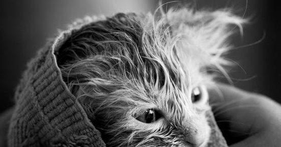 Вымытый котёнок