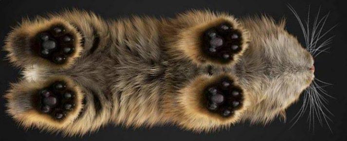 Кошка стоит на прозрачном столе