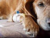 Лептоспироз у собак