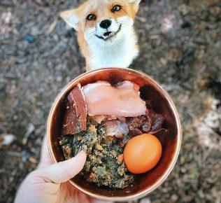 Питание лисы